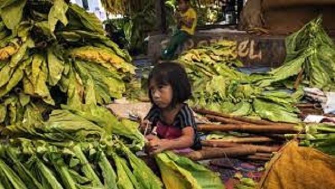 Trabajo Infantil- Ind. Tabacalera