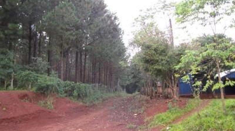 Protección Ambiental y Limitación para Plantaciones Foresto industriales dentro de los Ejidos Urbanos