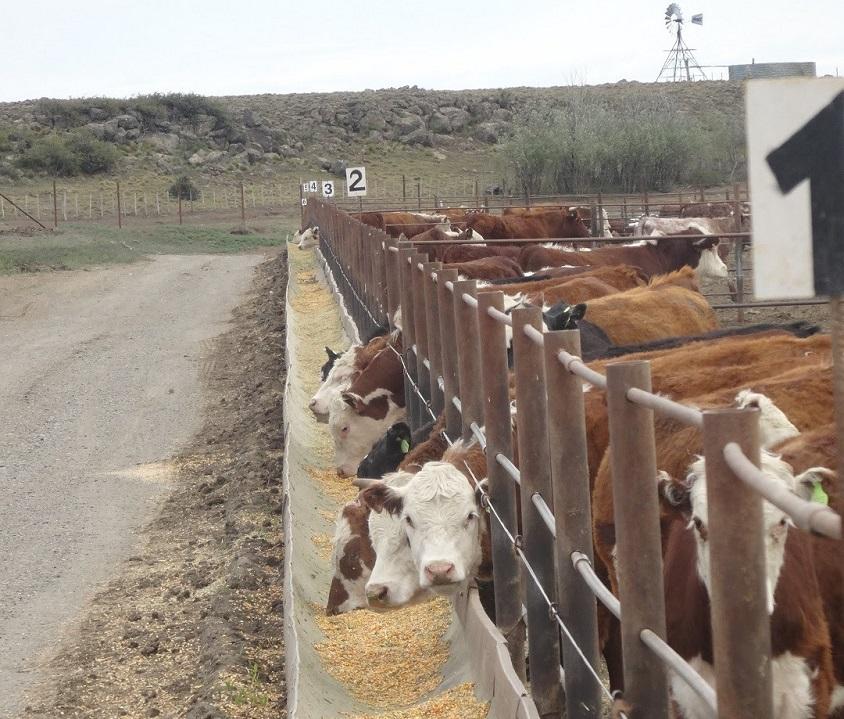 Capacitación Sobre Nutrición Animal en C. de la Sierra