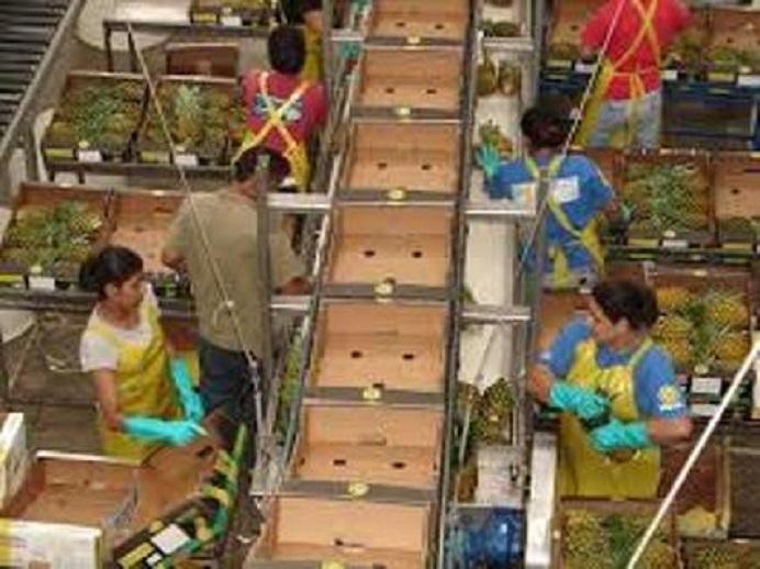 Empresa de la actividad Frutihortícola
