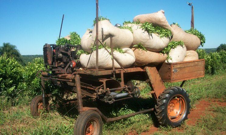 Ayuda extraordinaria a trabajadores tareferos