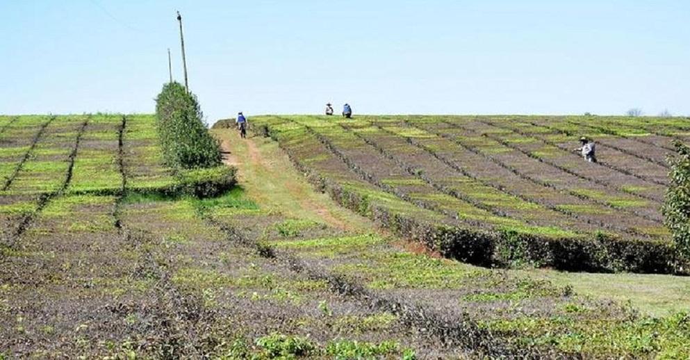 El PAyS propone un impuesto a las grandes extensiones de tierras