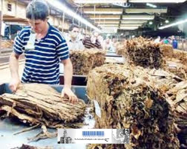 Fondo Especial del Tabaco-Actividad tabacalera