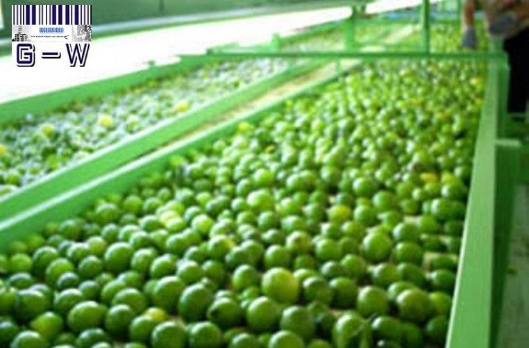 Limones de exportación Argentinos