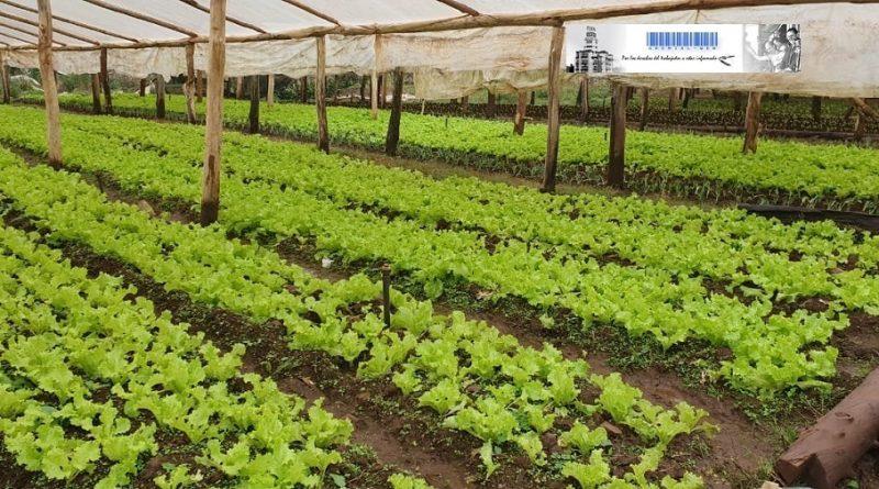 Organizaciones sociales y cooperativas producen alimentos en tierras ociosas