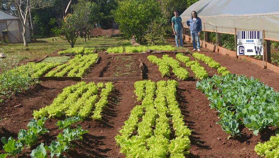 Producción de alimentos en Colonia Primavera de El Soberbio