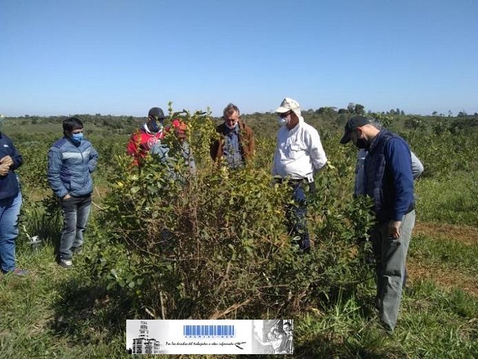 Finalizó la capacitación presencial para trabajadores rurales de la cosecha de yerba mate