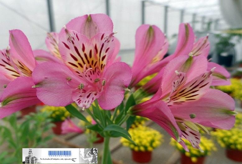 Programa de Promoción de la Floricultura en la provincia