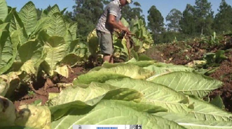 Provincias tabacaleras en defensa del FET