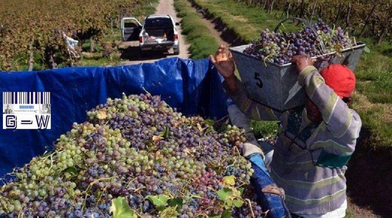 Trabajadores que se desempeñan en viñas.