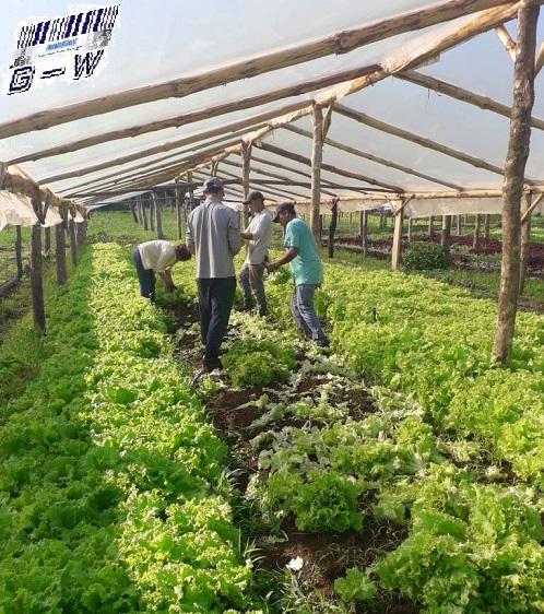 Organizaciones campesinas y agrarias en defensa de la producción