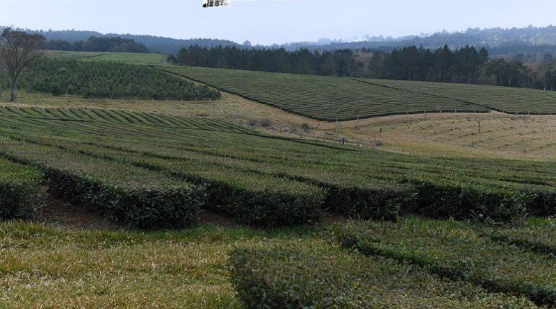 Ciclo de capacitaciones a Trabajadores Rurales del té