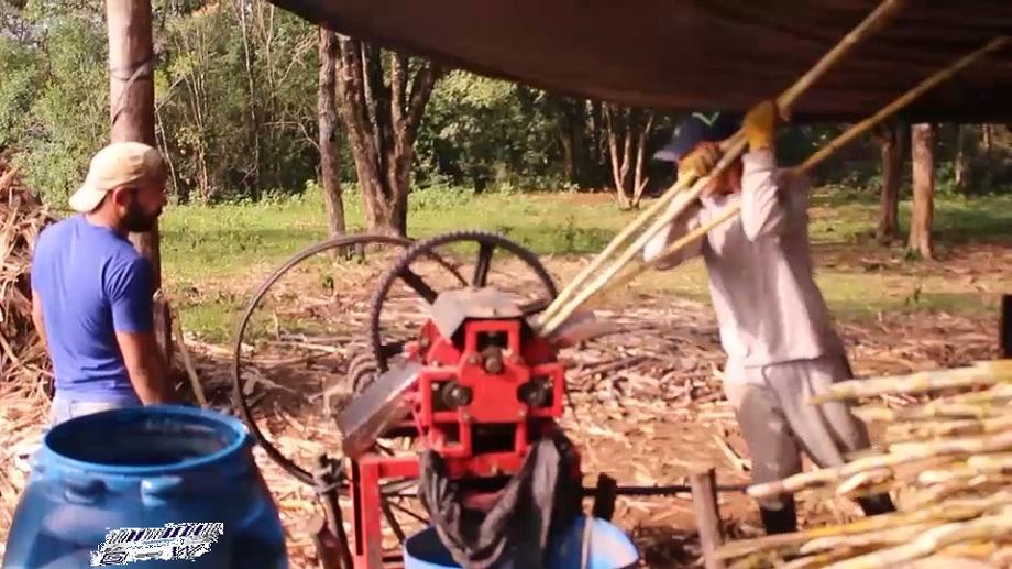 Medidas para el mejoramiento y manejo adecuado del cultivo de la materia prima -caña de azúcar- en cuanto a su elaboración, manufactura y comercialización