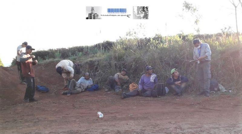 Operativo de control en yerbales de Campo Grande