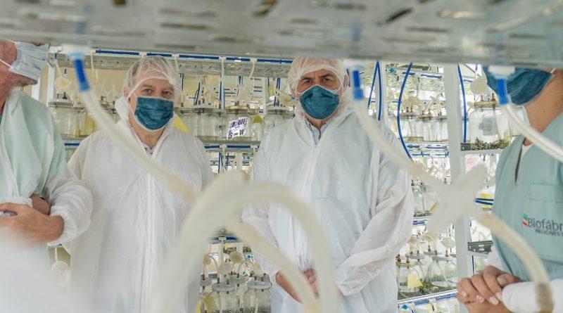 Laboratorios de vitroplantas en la Biofábrica